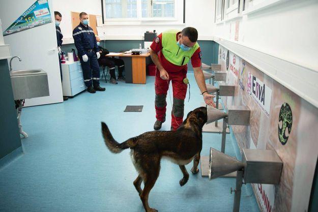 Didier Roisse et son berger belge Joye, du service départemental d'incendie et de secours (Sdis) de l'Oise, dans la pièce dédiée à l'étude Nosaïs-Covid-19 de l'Ecole nationale vétérinaire d'Alfort (EnvA), le 2 octobre.