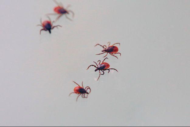 Maladie de Lyme pour un meilleur diagnostic