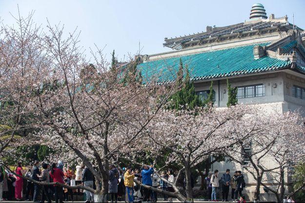 Des touristes sous les cerisiers en fleurs à Wuhan, berceau de l'épidémie de covid-19, le 4 mars 2021.
