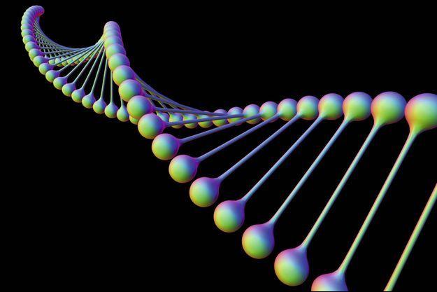 L'acide désoxyribonucléique d'ADN est composée de deux brins enroulés en hélice double. L'ADN contient des sections appelées gènes qui codent l'information génétique de l'organisme.
