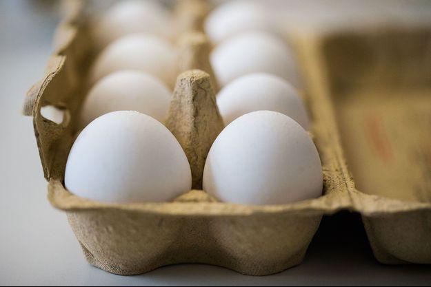 Des œufs dans un laboratoire allemand, avant un test pour détecter la présence de fipronil, le 7 août à Krefeld.