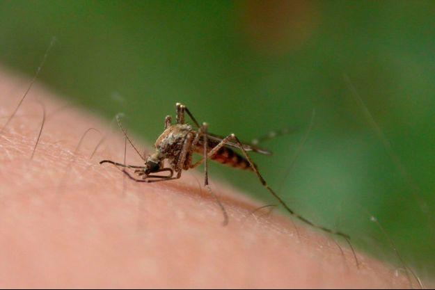 """Paludisme : l'OMS publie des """"résultats alarmants"""""""