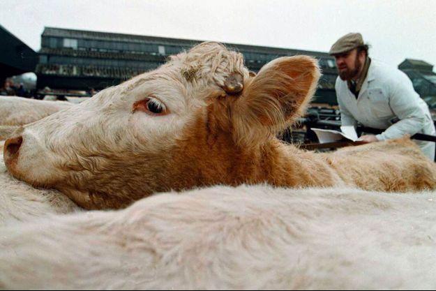 Photo d'archive datant de 1996, en pleine épidémie de maladie de la vache folle, à Banbury, en Angleterre.