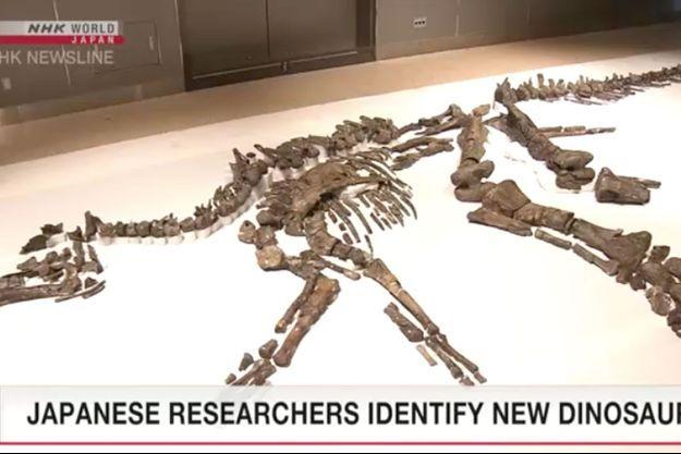 Une nouvelle espèce de dinosaure a été retrouvée au Japon.