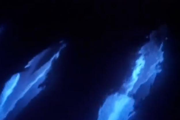 Les dauphins ont traversé des algues bioluminescentes.