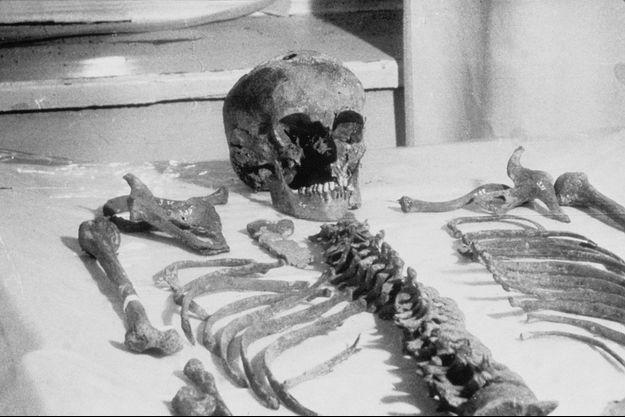 Le squelette reconstitué du Tsar Nicolas II.
