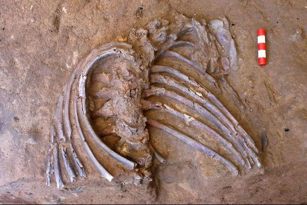 Lors d'une fouille sur des restes d'un Homme de Néandertal.