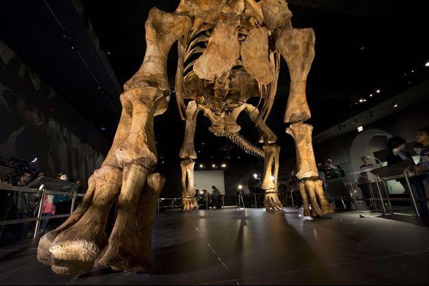 Le titanosaure de 37 mètres de long exposé au muséum d'histoire naturelle à New York.