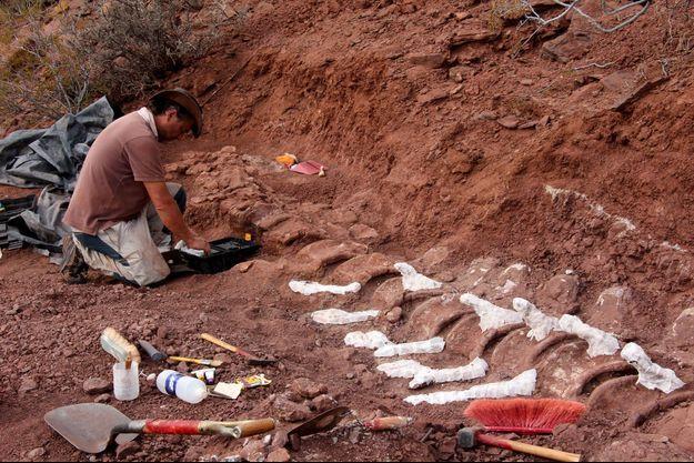 Le squelette de Patagotitan mayorum découvert en 2017 en Argentine.