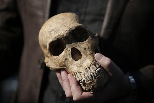 Illustration d'un crâne d'Homo sapiens.