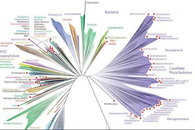 Le nouvel arbre de la vie créé par les chercheurs.