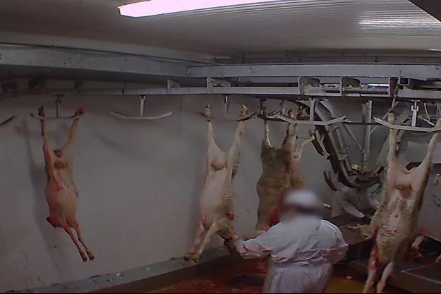 Scène d'horreur dans l'abattoir d'Alès.