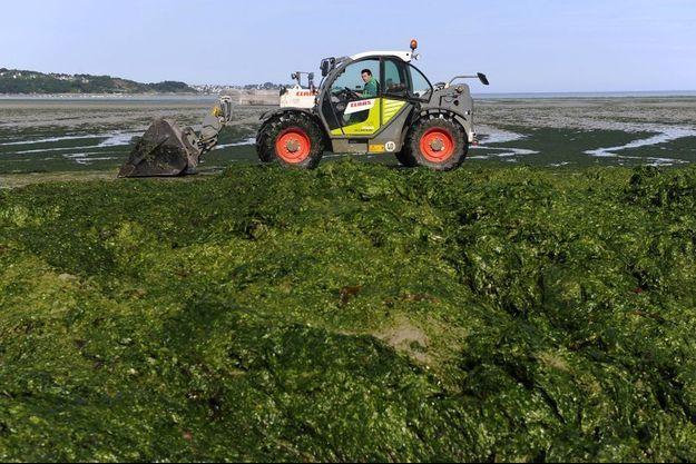 Des algues vertes recouvrent certaines plages d'Hillion.
