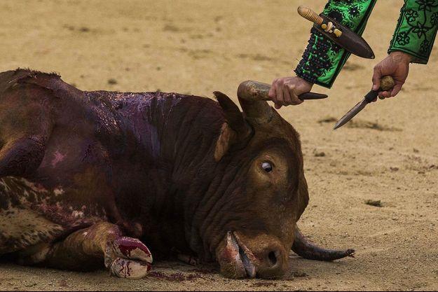 Cette année encore, 600 taureaux périront dans les arènes françaises.
