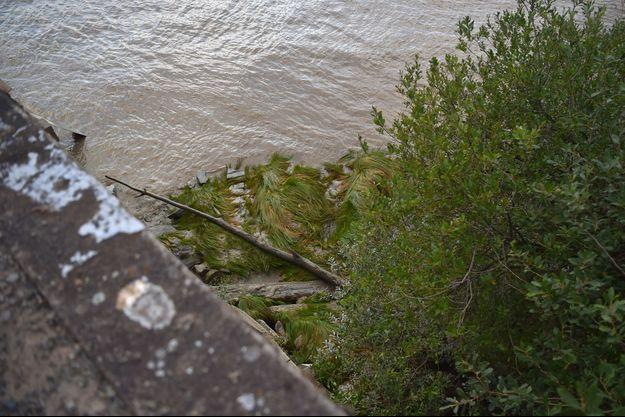Le corps de Steve a été retrouvé près du quai Ferrand au bord de la Loire.