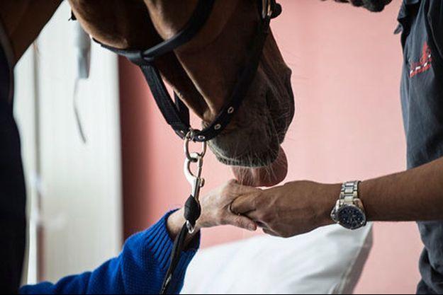 Le cheval Peyo détecte puis apaise les personnes en fin de vie.