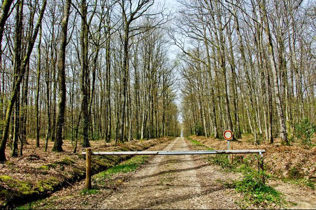 La forêt de Bercé, dans la Sarthe.