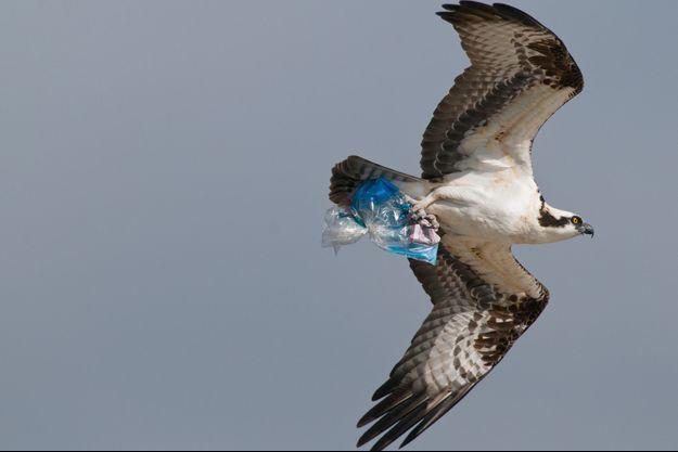 Les estomacs de 94% des oiseaux de la mer du Nord contiennent du plastique (photo d'illustration)
