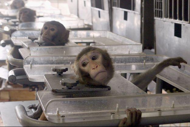12 millions d'animaux torturés chaque année dans les laboratoires en Europe.
