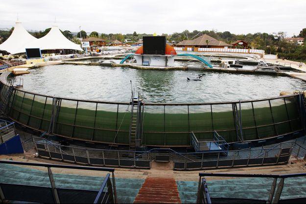 Le bassin des orques, le 6 octobre.