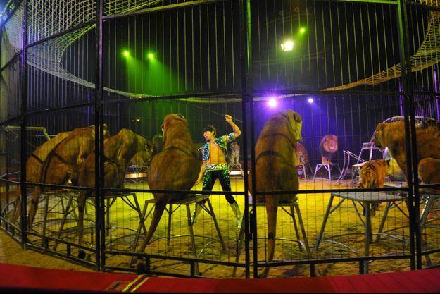 Frédéric Edelstein, lors d'un spectacle du cirque Pinder, en 2010.