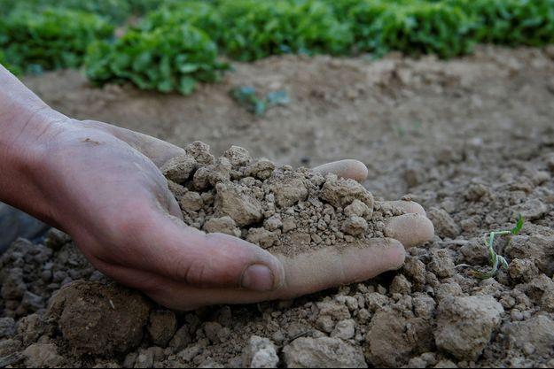 Un fermier tient de la terre sèche dans ses mains (image d'illustration).