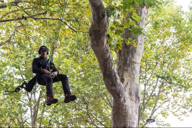 Thomas Brail, ici le 12 septembre, perché sur un platane face au ministère de la Transition écologique.