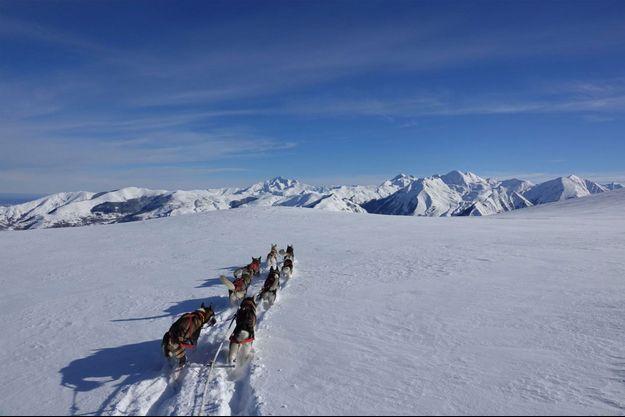 Les chiens de traîneau de Romain dans la neige