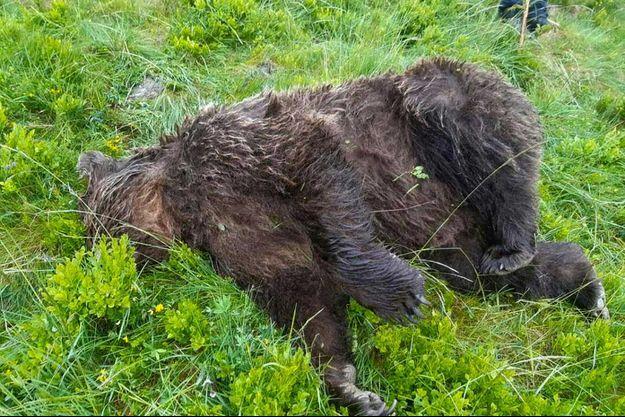 L'ours découvert mort dans les Pyrénées, mardi.
