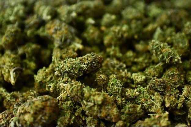 Du cannabis.