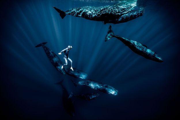 Marche aquatique avec les cachalots à l'île Maurice