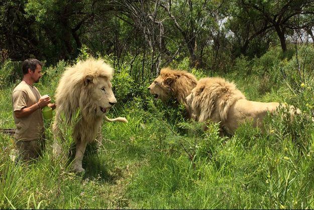 Kevin Richardson et ses lions.