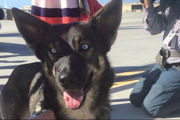 Luna, la chienne sauvée après cinq semaines passées sur une île.