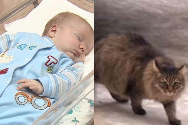 Le bébé abandonné a été sauvé par le chat errant.