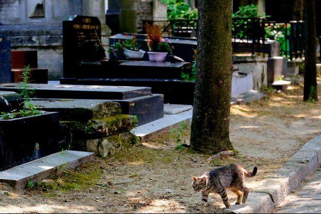 Un chat dans un cimetière