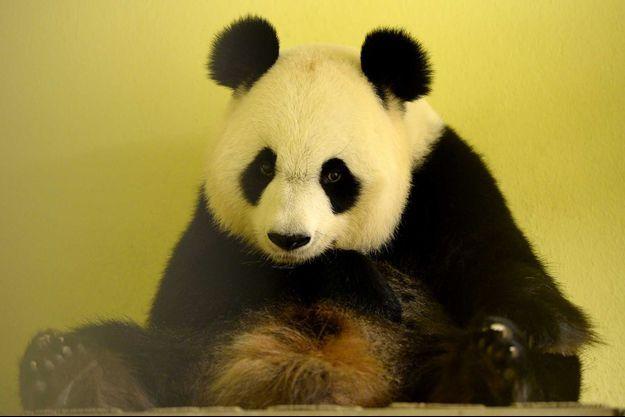 Le panda Huan Huan, le 26 juillet.