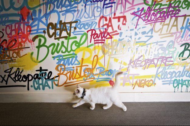 La déco street art de l'appartement des matous est signée Renk.