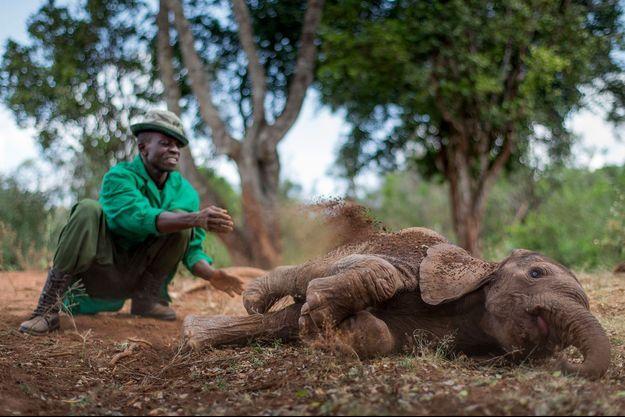 Au total, 352 271 éléphants ont été dénombrés