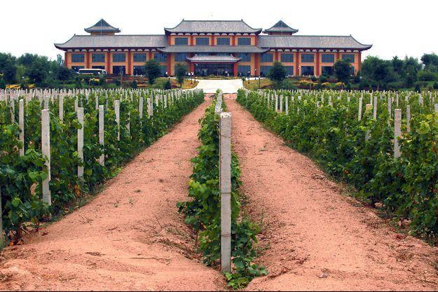 Les vignes de Yinchuan (Chine) / Image d'illustration