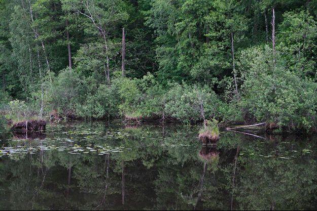 La Grande forêt de Bialowieza en Pologne