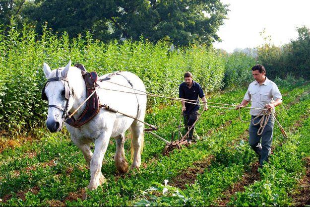 Sylvain Picard et son cheval de labours.