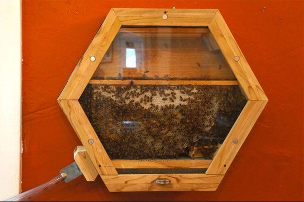 La ruche BEEcosystem peut être reliée à l'extérieur par un tube.