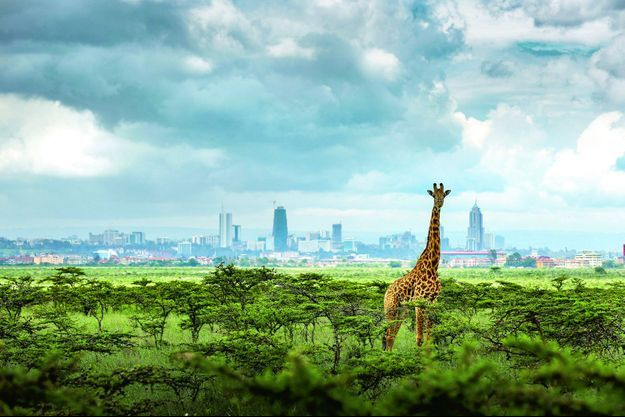 « Animals in the City », de Paras Chandaria.