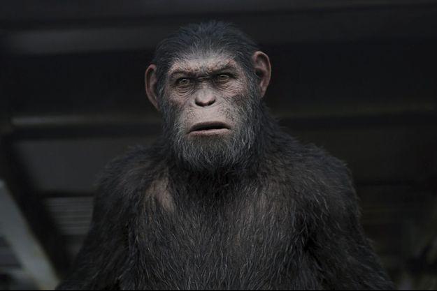 """""""La planète des singes. Suprématie"""" : un blockbuster bluffant!"""
