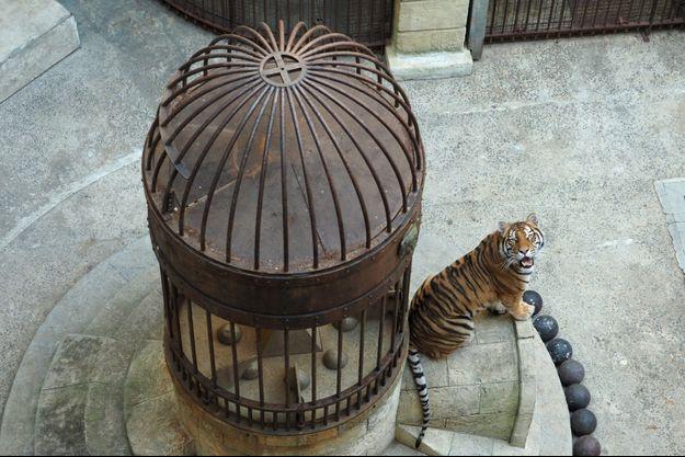 "Un tigre de ""Fort Boyard""."