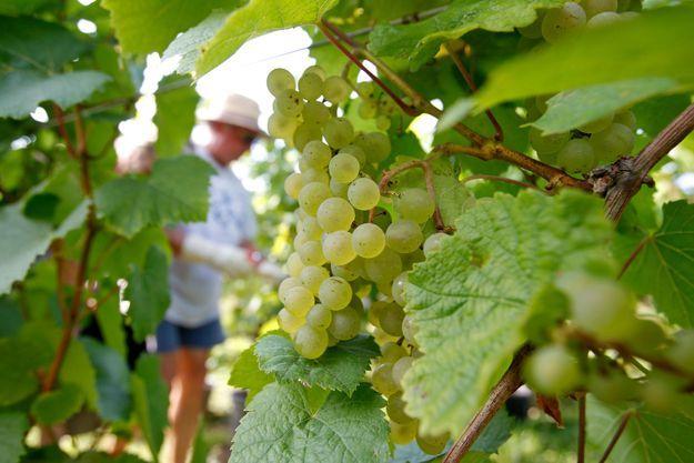Des trésors nés dans les vignobles de Champagne. (L'abus d'alcool est dangereux pour la santé. A consommer avec modération.)