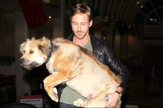 Ryan Gosling et son chien George, à l'aéroport de Los Angeles en juin 2011.