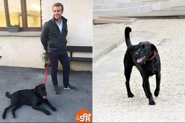 Après avoir vécu « une vie de chien », Nemo, un labrador noir croisé griffon, est devenu l'ambassadeur des animaux abandonnés à l'Elysée. En médaillon, le jour de son adoption par Emmanuel Macron, à la SPA d'Hermeray, dans les Yvelines.
