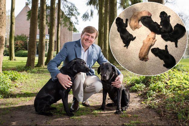 Photo des 50 ans du roi Willem-Alexander des Pays-Bas avec ses chiens. En vignette, les bébés labradors de la Cour néerlandaise