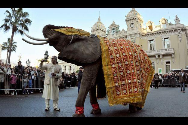 Lundi 21 mars, sur la place du Casino, Baby, l'éléphante (ici avec son cornac) âgée de 25 ans. Comme les mariés.